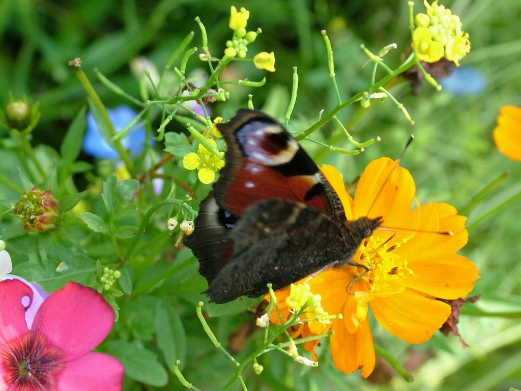 Being tender and open is beautiful words of wisdom for Butterfly on flowers
