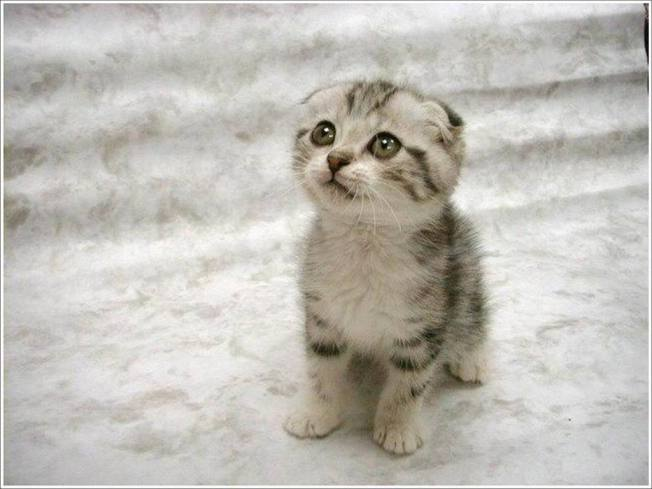 Cute_Cats_and_Kittens