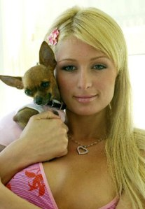 Paris Hilton, who once pondered whether Wal-Mart only sold walls.