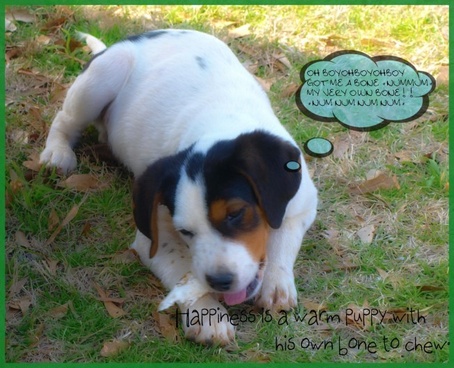 BeFunky_Watercolor_1puppybone.jpg