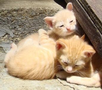 Godwin kittens - next youngest litter3